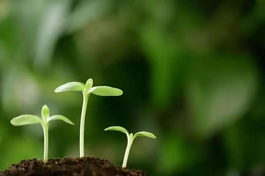 初中生关于成长的作文:我们总要成长,长成大孩子